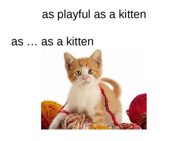 as playful as a kitten as … as a kitten