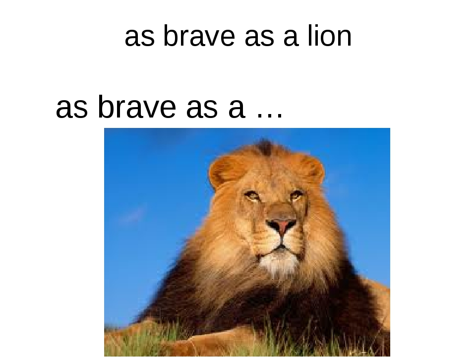 as brave as a lion as brave as a …