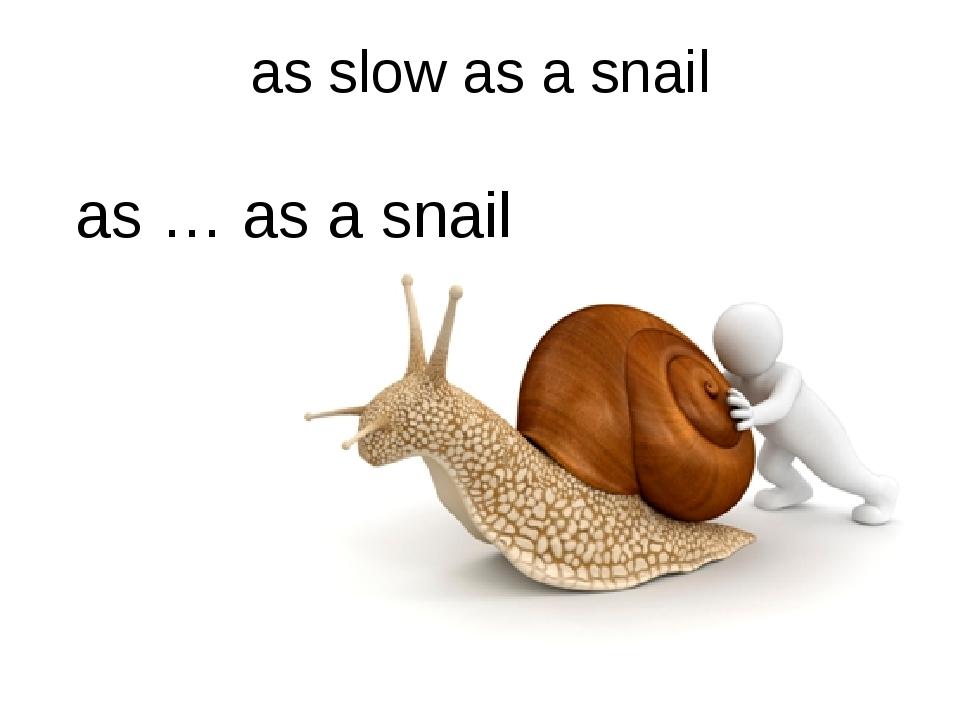 as slow as a snail as … as a snail