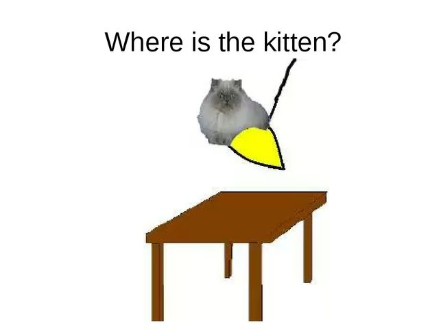 Where is the kitten?