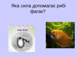 Яка сила допомагає рибі фагак?