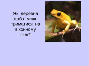 Як деревна жаба може триматися на віконному склі?