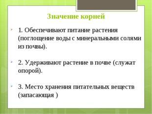 Значение корней 1. Обеспечивают питание растения (поглощение воды с минеральн