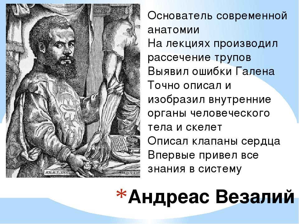 Андреас Везалий Основатель современной анатомии На лекциях производил рассече...