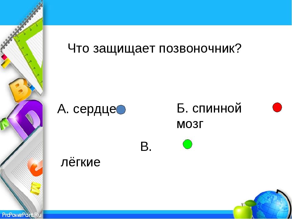 А. сердце В. лёгкие Б. спинной мозг Что защищает позвоночник? ProPowerPoint.Ru