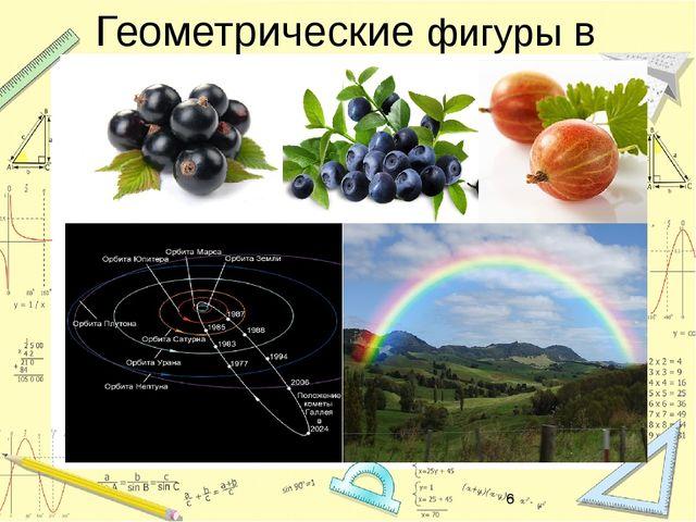 Геометрические фигуры в природе