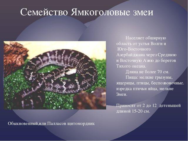Семейство Ямкоголовые змеи Населяет обширную область от устья Волги и Юго-Во...