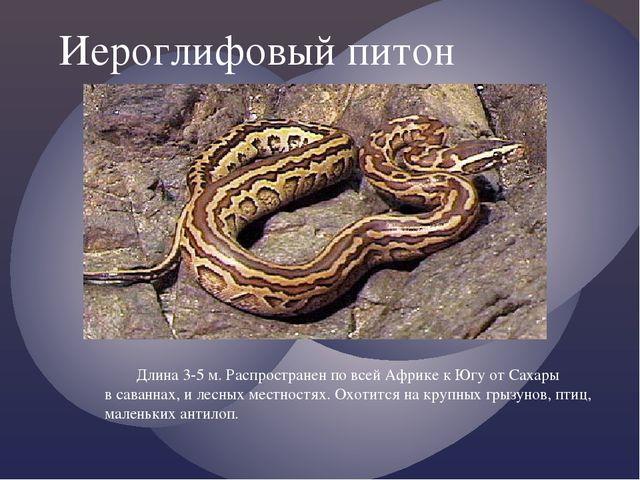 Иероглифовый питон Длина 3-5 м. Распространен по всей Африке к Югу от Сахары...