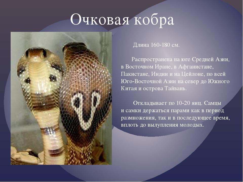Очковая кобра Длина 160-180 см. Распространена на юге Средней Азии, в Восточ...