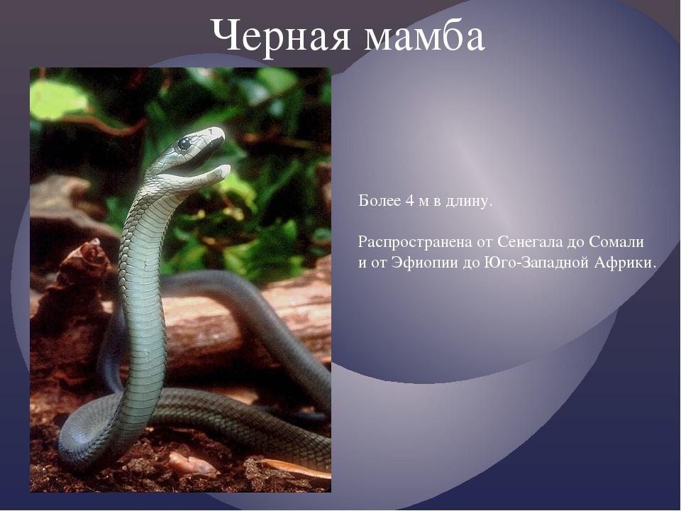 про чёрная мамба змею сообщение