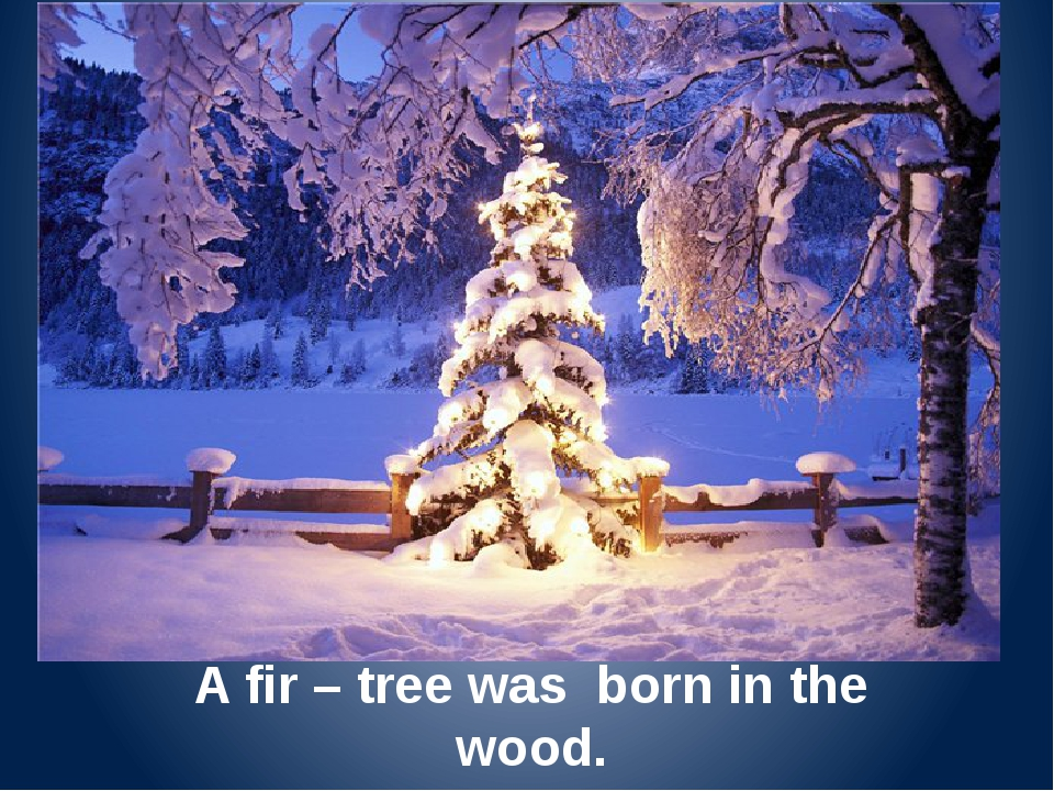A fir – tree was born in the wood. And in the wood was seen.