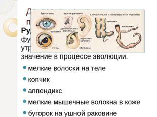 Доказательства происхождения человека от животных Рудименты - органы, которые