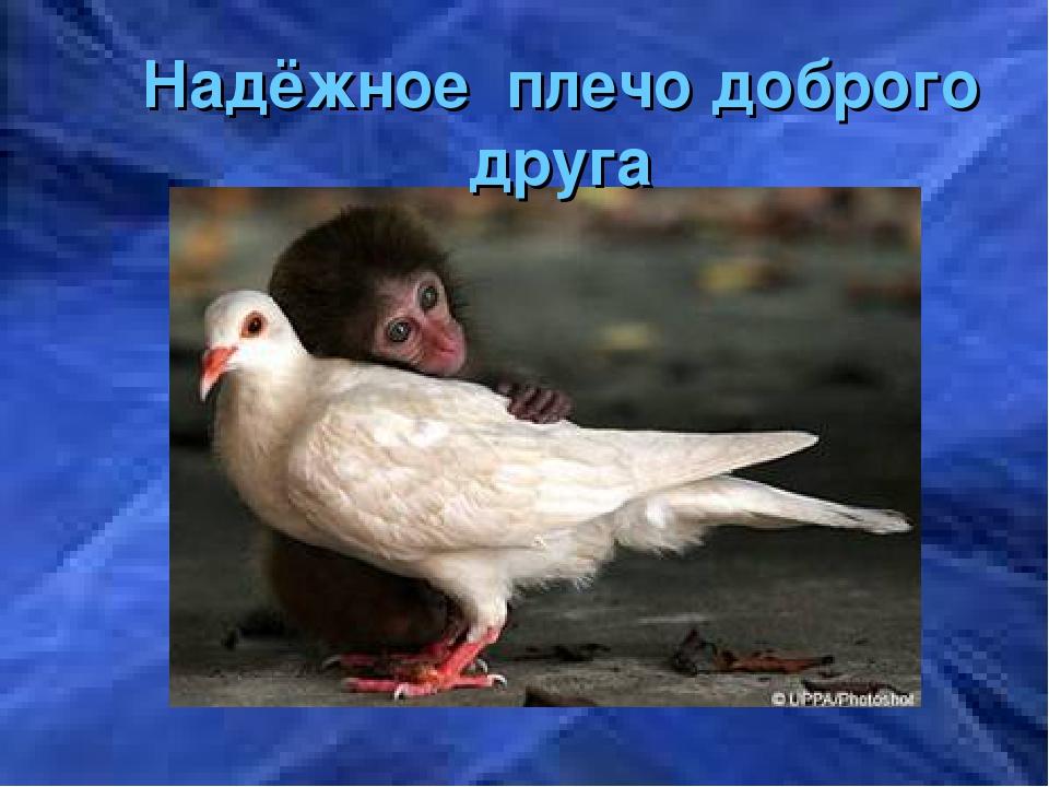 Надёжное плечо доброго друга