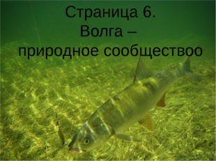 Страница 6. Волга – природное сообществоо