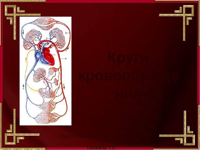 Круги кровообращения Подготовила учитель биологии МОУ Лицей «№5» Трохина Т.Е....
