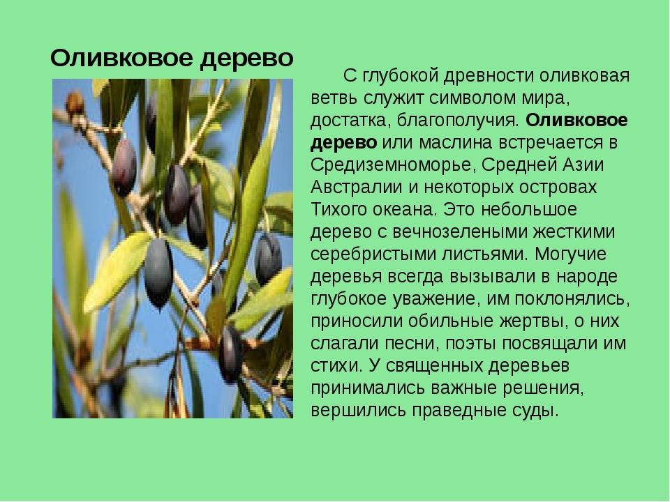 Оливковое дерево С глубокой древности оливковая ветвь служит символом мира, д...