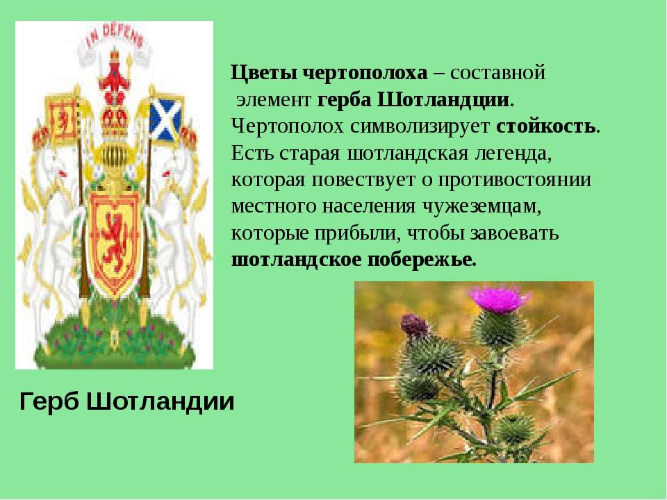 Цветы чертополоха – составной элемент герба Шотландции. Чертополох символизи...