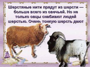 Шерстяные нити прядут из шерсти — больше всего из овечьей. Но не только овцы