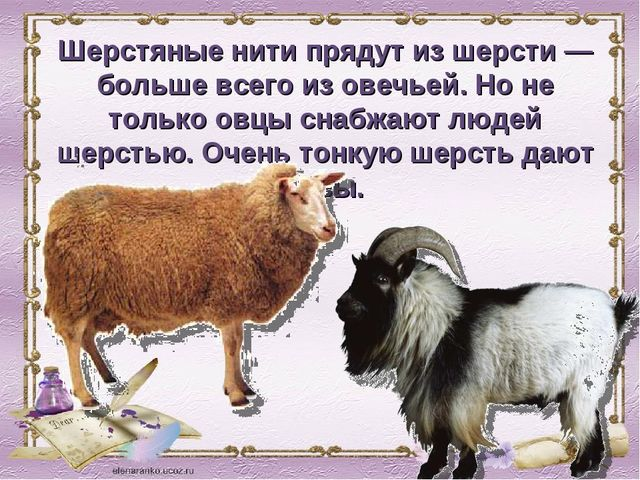 Шерстяные нити прядут из шерсти — больше всего из овечьей. Но не только овцы...