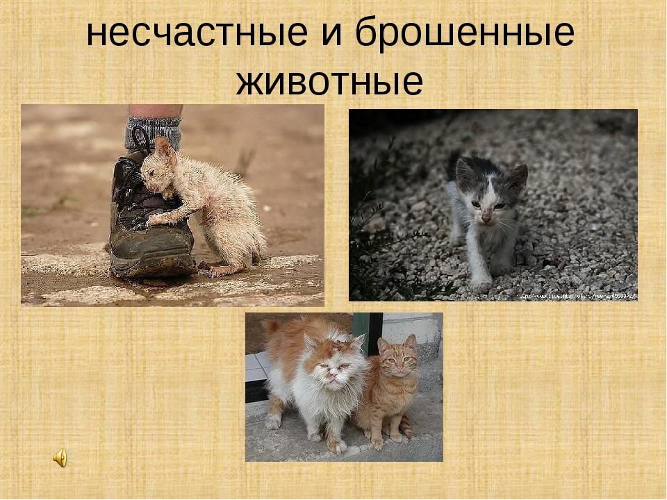 несчастные и брошенные животные