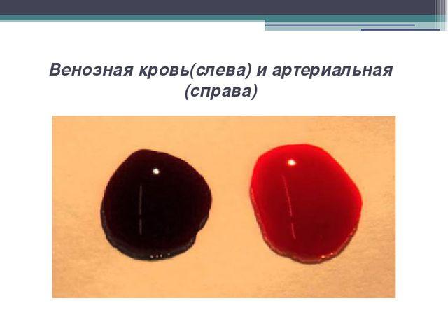 Венозная кровь(слева) и артериальная (справа)