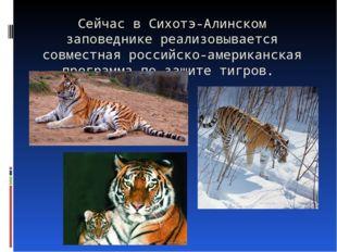 Сейчас в Сихотэ-Алинском заповеднике реализовывается совместная российско-аме