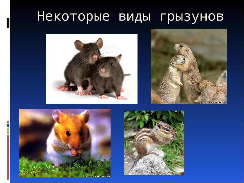 Некоторые виды грызунов