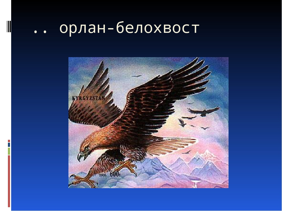 .. орлан-белохвост