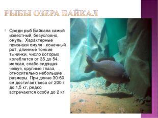 Среди рыб Байкала самый известный, безусловно, омуль. Характерные признаки ом