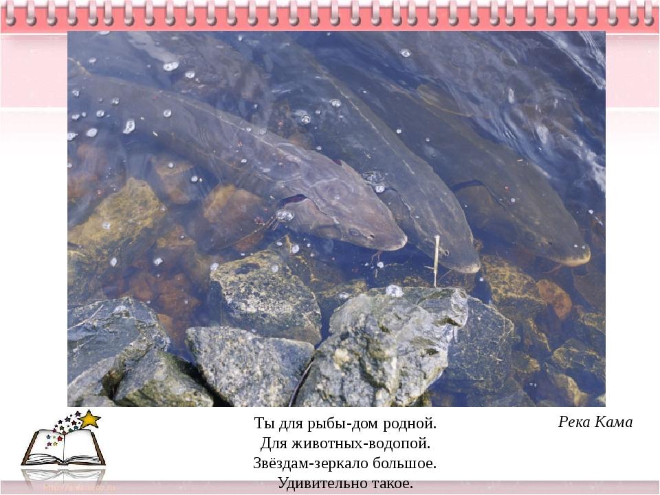 Ты для рыбы-дом родной. Для животных-водопой. Звёздам-зеркало большое. Удивит...