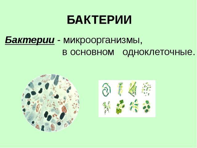 БАКТЕРИИ Бактерии - микроорганизмы, в основном одноклеточные.