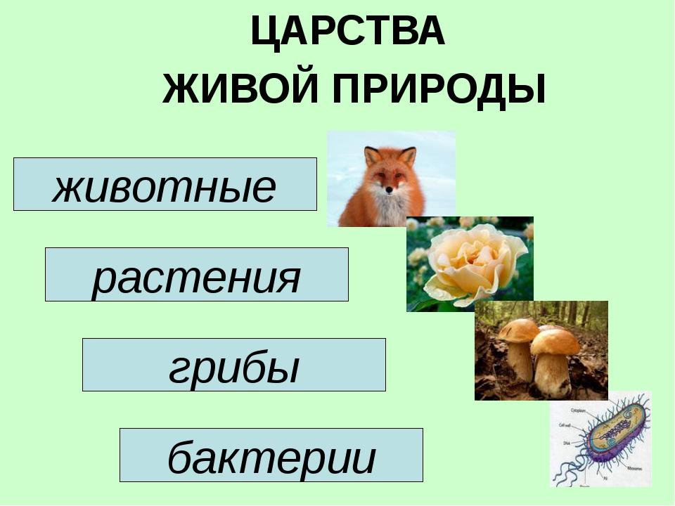 ЦАРСТВА ЖИВОЙ ПРИРОДЫ животные растения грибы бактерии
