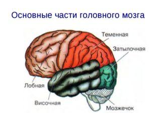 Основные части головного мозга