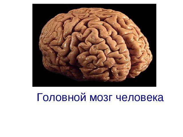 Головной мозг человека ГОЛОВНОЙ МОЗГ ЧЕЛОВЕКА