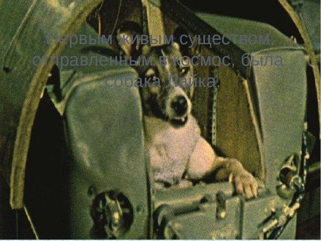 Первым живым существом, отправленным в космос, была собака Лайка