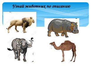 Узнай животных по описанию