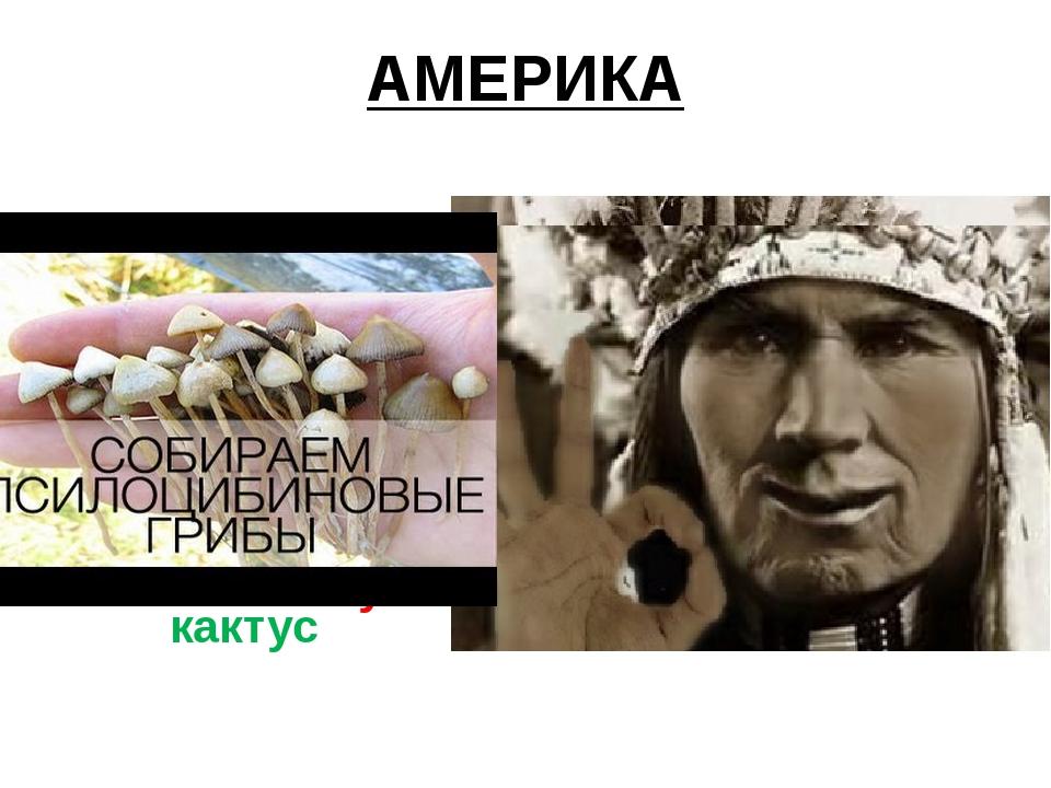 АМЕРИКА Кокаиновый куст Мескалиновый кактус
