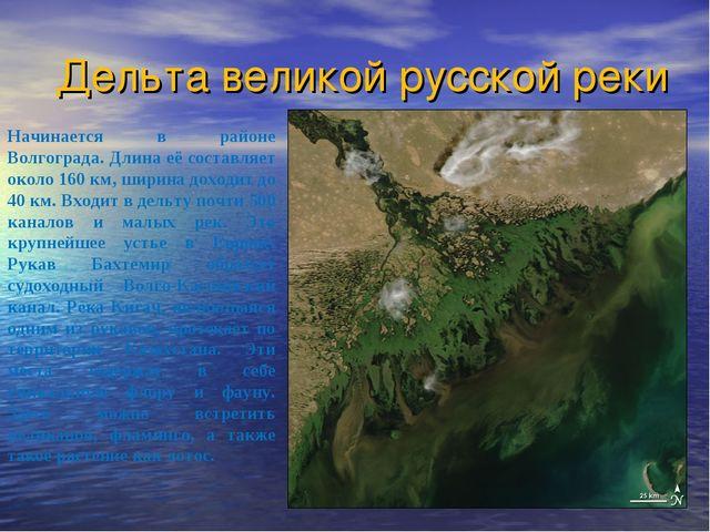 Дельта великой русской реки Начинается в районе Волгограда. Длина её составля...