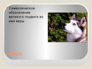 собака Символическое обозначение великого подвига во имя веры