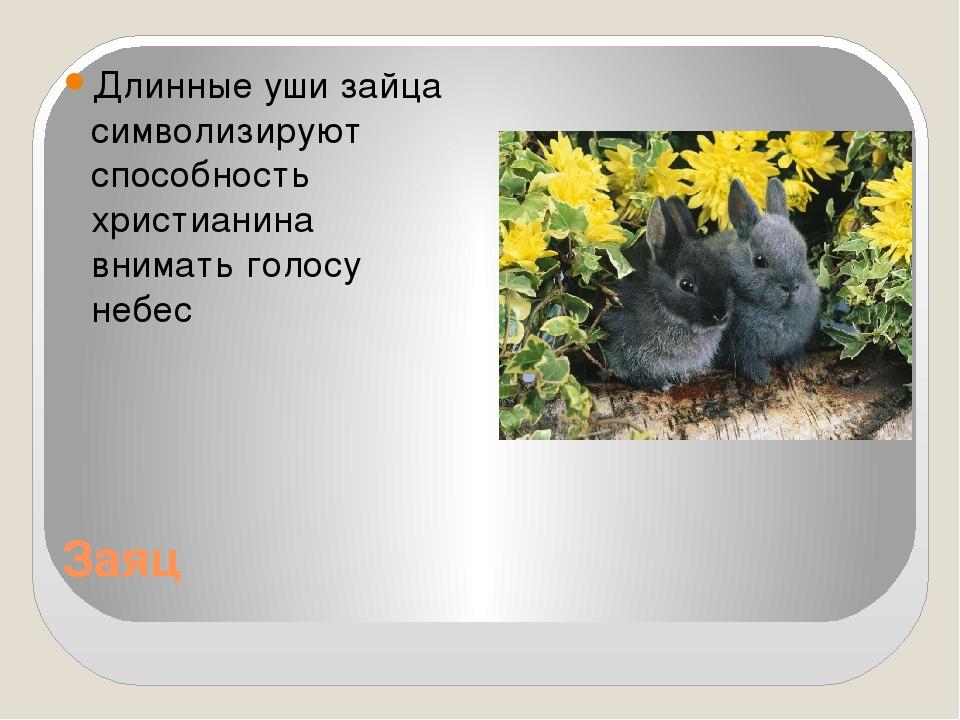 Заяц Длинные уши зайца символизируют способность христианина внимать голосу н...