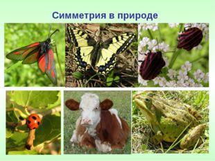 Симметрия в природе