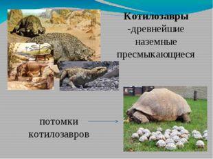 Котилозавры -древнейшие наземные пресмыкающиеся потомки котилозавров