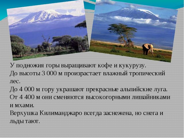 У подножия горы выращивают кофе и кукурузу. До высоты 3 000 м произрастает вл...