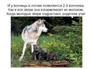 И у волчицы в логове появляются 2-3 волчонка. Как и все звери она вскармливае