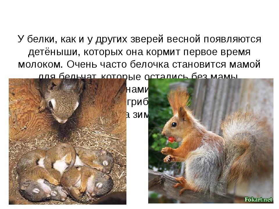 У белки, как и у других зверей весной появляются детёныши, которых она корми...