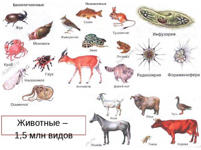 Животные – 1,5 млн видов