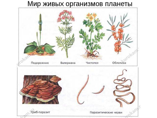 Мир живых организмов планеты