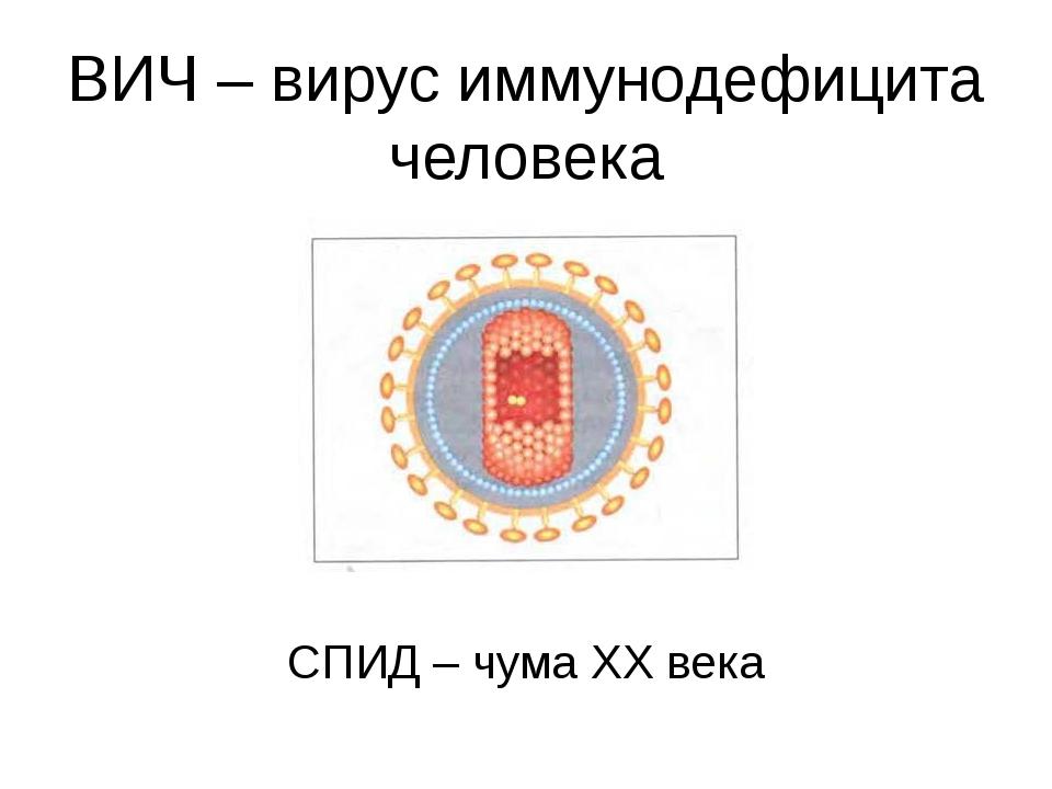 ВИЧ – вирус иммунодефицита человека СПИД – чума ХХ века