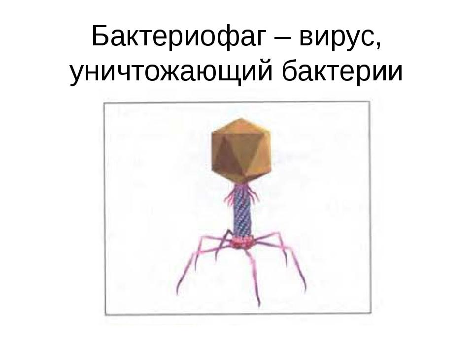 Бактериофаг – вирус, уничтожающий бактерии