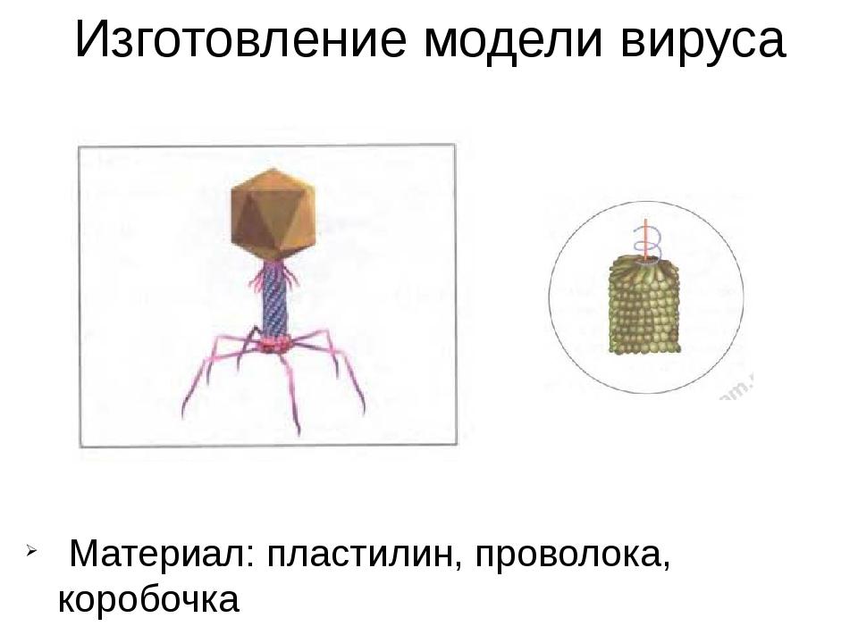 Изготовление модели вируса Материал: пластилин, проволока, коробочка